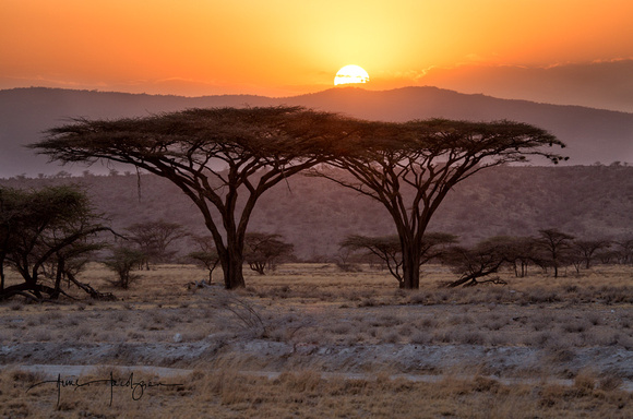 Acacia Sunset, Samburu